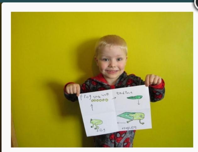 Daniel drew a beautiful life cycle of a frog.