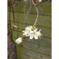Blossom on my tree.