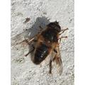 I saw a bee.