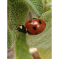 There were ladybirds living in my garden!