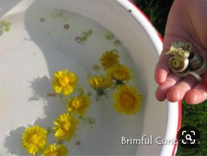 A dandelion + a little water = a magical experiment. Just pluck the head off a dandelion,