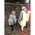 Planting hawthorn