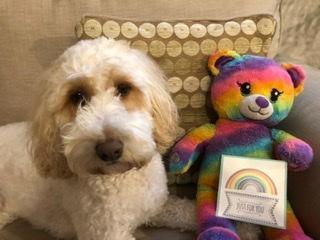 Rainbow Bear is having fun at Mrs Deary's house!