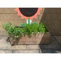 Year 1&2 Planter