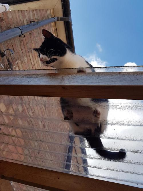 Silly cat on the lean-to roof.