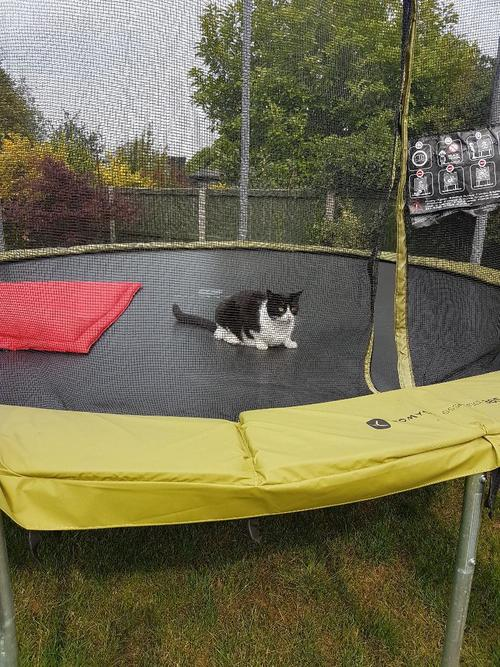 Cat having a bounce on the trampoline,