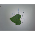 We learnt about the function of leaves