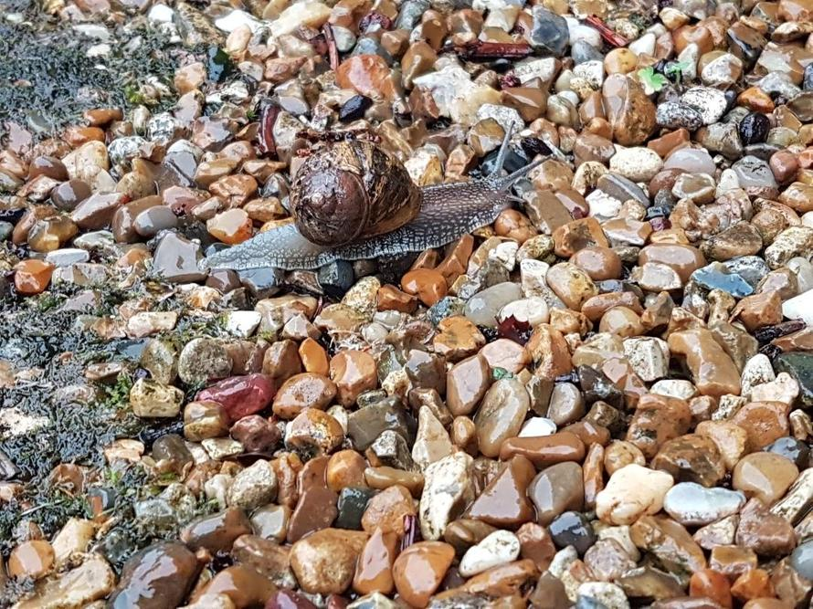 'Turbo' the snail (maybe).