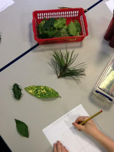 We compared evergreen and deciduous trees.