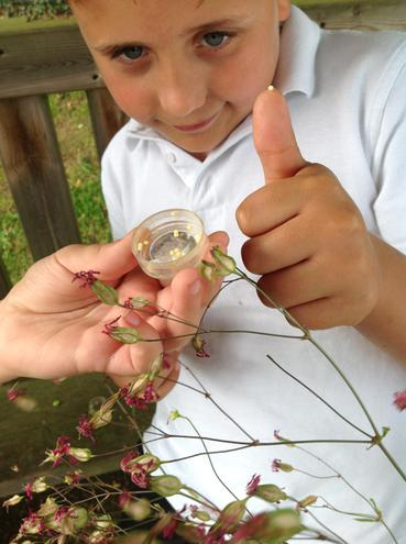 Outdoor science and pollination