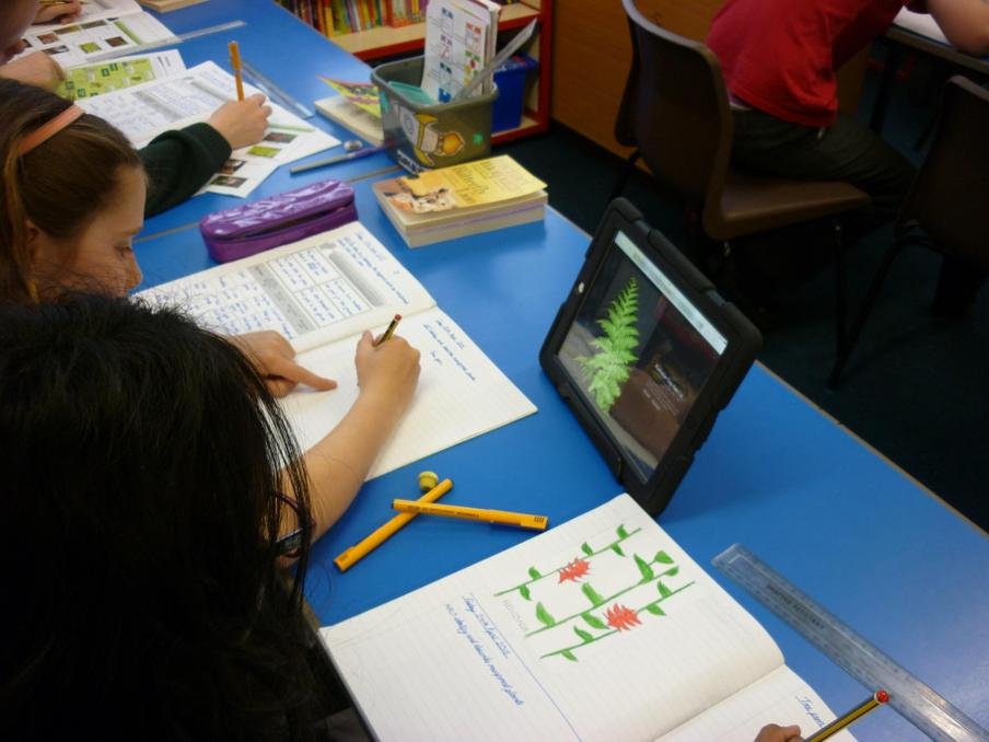 Creating posters about rainforest plants