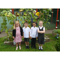 tallest sunflowers 2016-17
