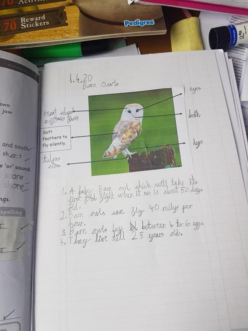 Barn Owl facts