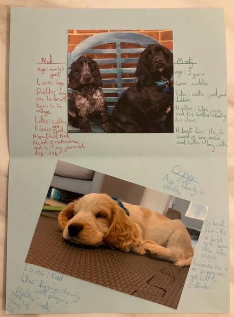 Anna made her Zine about her dogs. So lovely!