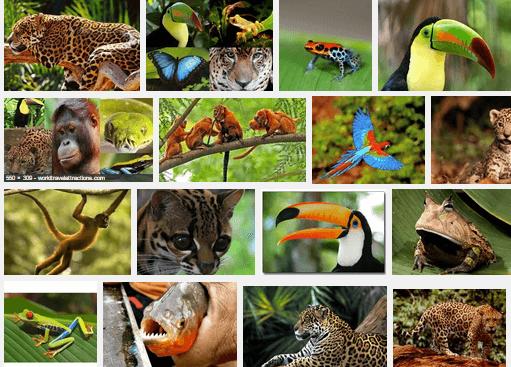 Amazing Rainforest Animals