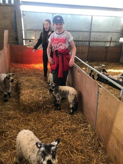 Extra help always welcome at lambing time.
