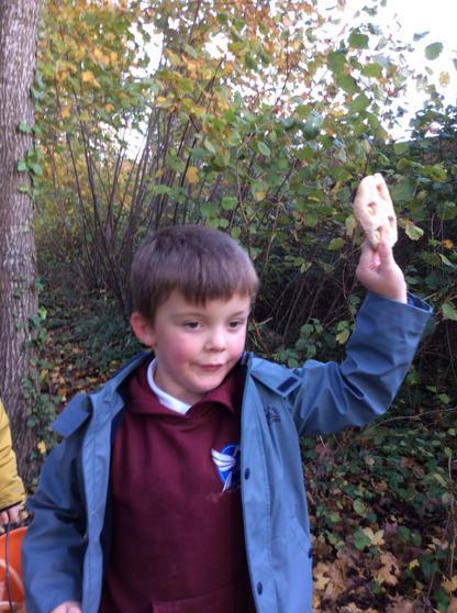 Finding dinosaur bones.
