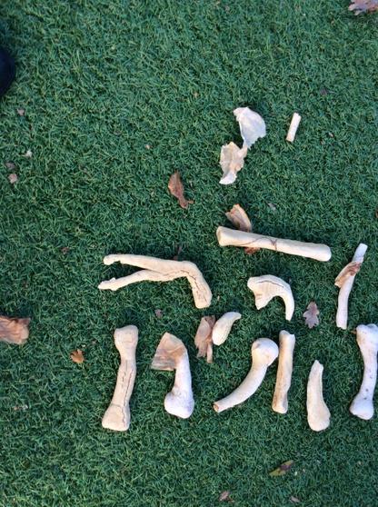Look at all our dinosaur bones we excavated.