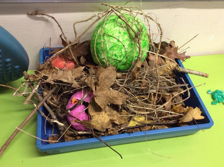 The dinosaur eggs in the nest.