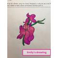 Emily P6R