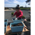 Connie-Belle has been planting in her garden!