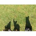 Jessica'a shadow zoo