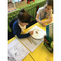 Observing and sorting bulbs and seeds.