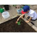 Great planting skills