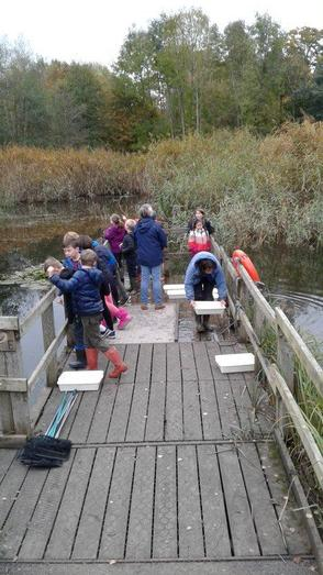 Pond dipping on a trip