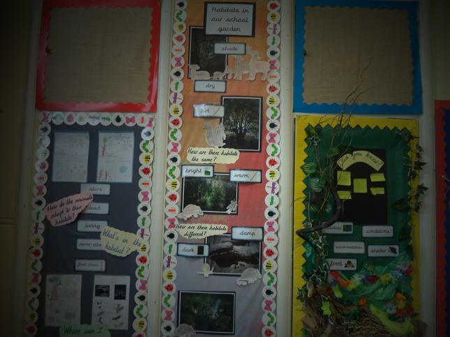 Year 2 Living things and their habitats