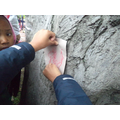 Different bark rubbings.