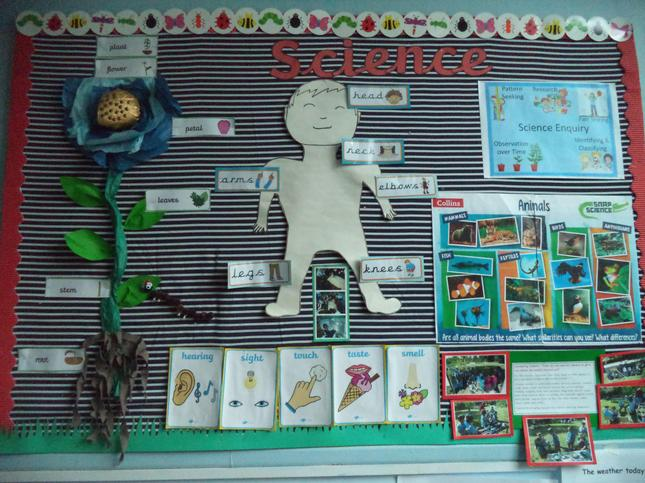 Year 1 Animals including Humans