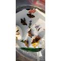 New butterflies enjoying some apple :)
