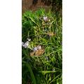 Spot the butterflies!