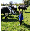 Alfie helps to look after his cows