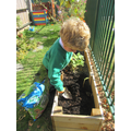 The children helped to plant some Spring bulbs