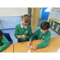 Science- Investigating germination