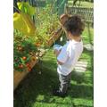 We grew lots of tomatoes