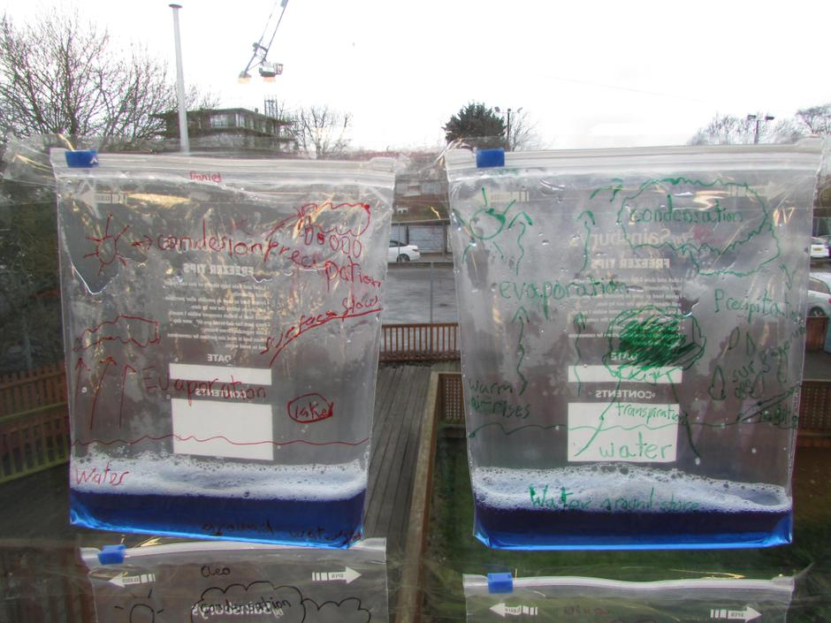 Water Cycles in a Bag Experiment 12.1.21