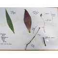 Science- Identifying parts of a flower