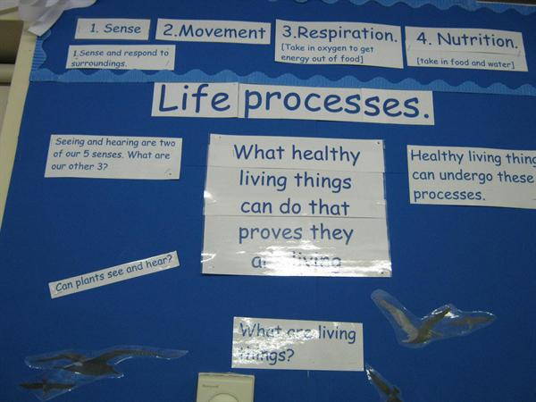 There are 7 main life processes.