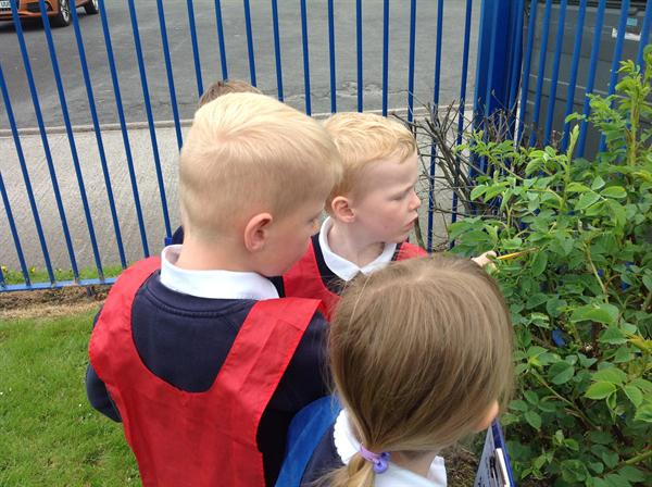Outdoor learning and exploring
