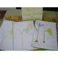 Scientific drawings from Y5