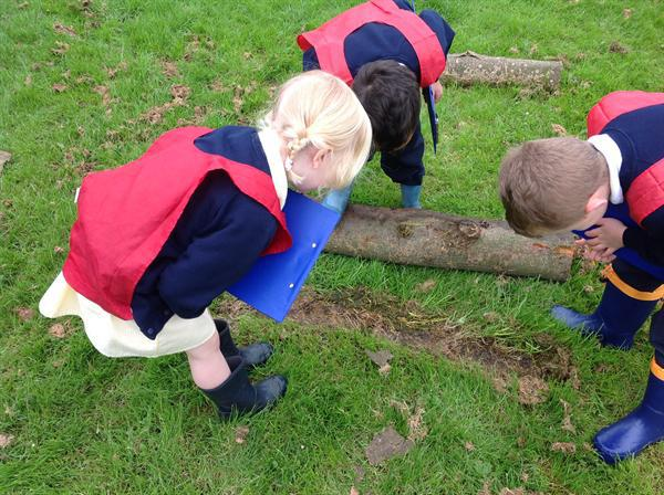 Reception Class love looking for mini beasts