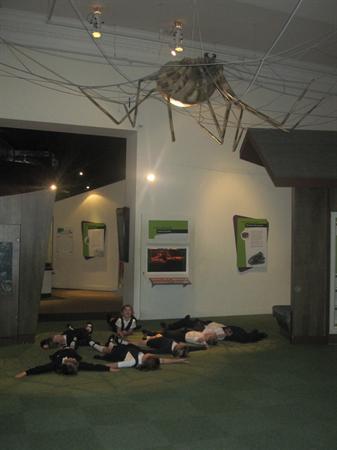 Animals at Liverpool museum.