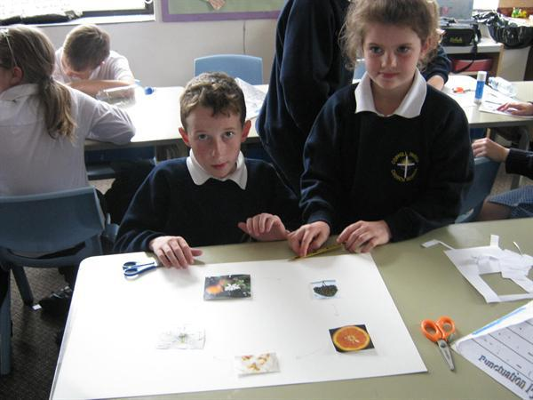 Ordering the stages of the orange tree.