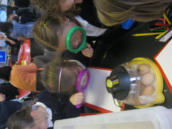 Looking at the eggs!