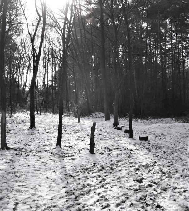 The wood cutting zone in the snow