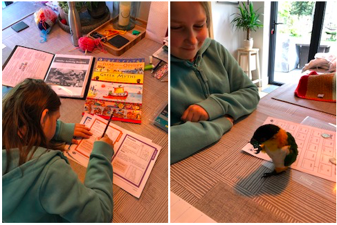 Holly working hard with some help from her parrot!