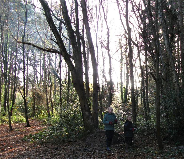Winter sunshine through the bare trees